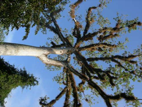 Best Tree Ever