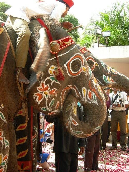 The Elephant He Rode In On