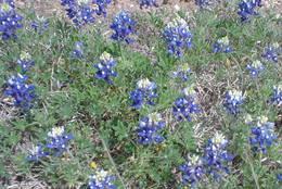 Wildflowers_1